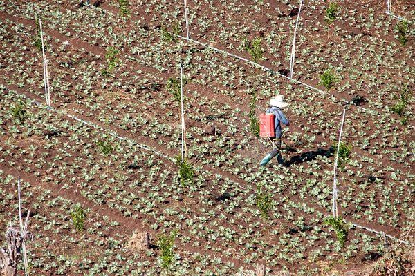 A vegyszerezés helyett a talajbaktériumok jelenthetik a megoldást a fenntartható gazdálkodásban