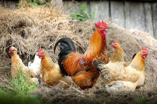 Az új takarmányüzemet főleg a baromfi- és sertéságazat igényeinek kielégítése miatt építik