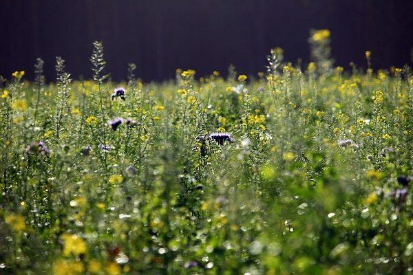 A zöldtrágyanövények forgalmát is befolyásolta a szójavetőmag piacának kilengése