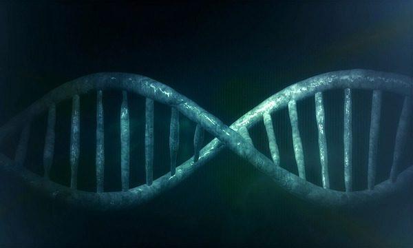 Sikeres volt a génszerkesztés: ellenállóbb sertéseket hoztak létre vele
