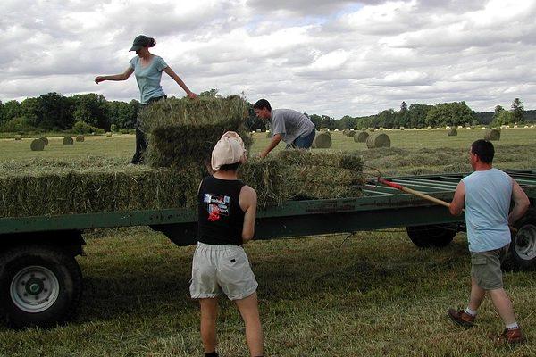 A közmunka területéről az agráriumba irányítaná át a munkaerőt az agrárminiszter