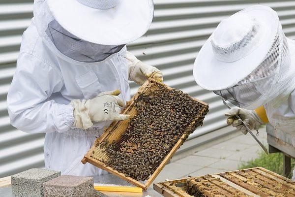 Többek között a rovarirtószerek miatt került válságba afrancia méztermesztés