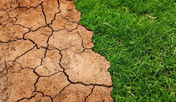 Klímakutatás az agráriumban - stressztűrő és ellenálló fajták kifejlesztését is tervezik Kaposváron jövő ősztől - képünk illusztráció