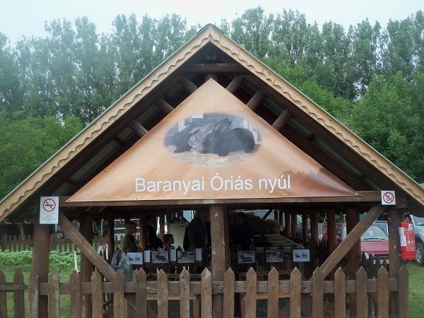 A Baranyai óriás nyúl kiállítóhelye a Szentlőrinci Gazdanapokon - Fotó: Nagy János