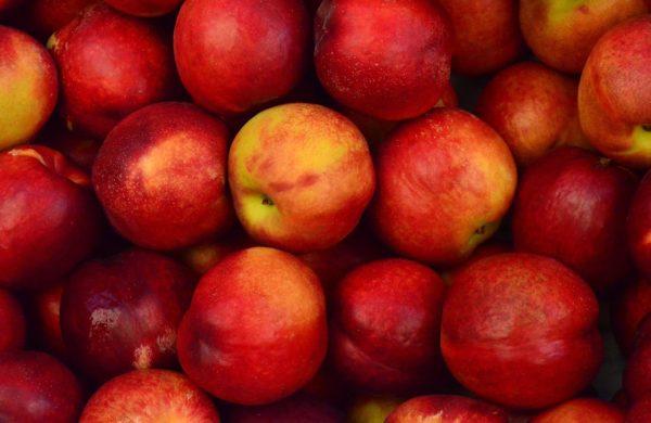 Két újabb feldolgozóüzemmel állapodtak meg a gazdák az ipari alma áráról (Fotó: Pixabay, Pexels)
