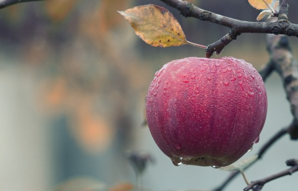 """Az étkezési alma ára is """"beszakadhat"""" (Fotó: Pixabay, mploscar)"""