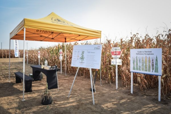 A gazdák szántóföldi szemlén tekintették meg az AQUAmax eredményeit is