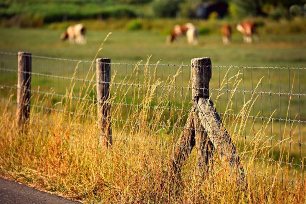 Meggátolja-e a kerítés a probléma továbbterjedését? (Fotó: Pixabay, MabelAmber)