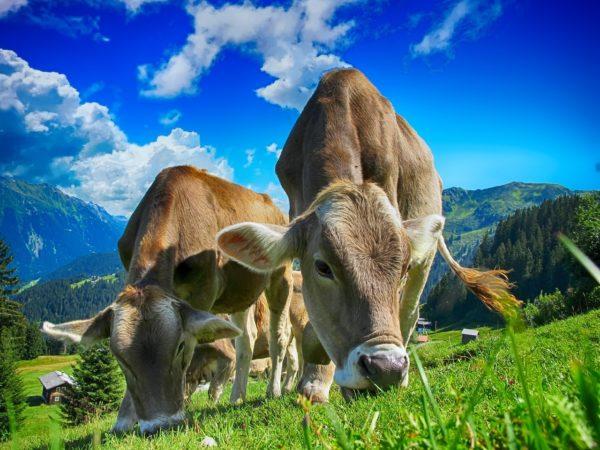 A modern technológia sokat segíthet az állattartás hatékonyságának növelésében (Fotó: Pixabay, TheDigitalArtist)