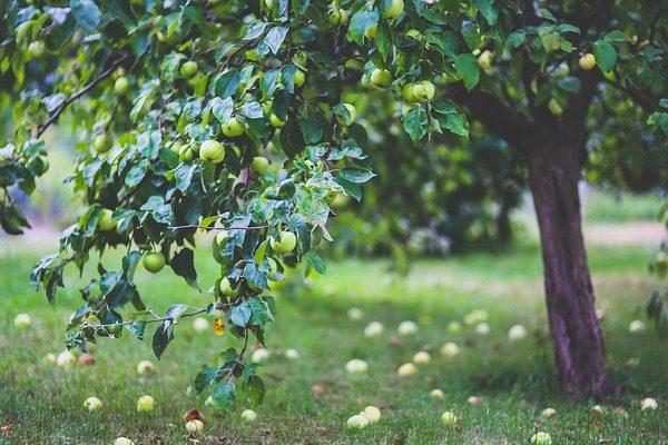Az almapiaci helyzet egyértelmű nyertese a dinamikusan fejlődő Lengyelország