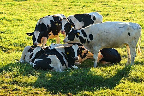 Komoly agrárfejlesztések várhatóak az állattartóknál aBudapest Bank agrárgazdasági mutatója szerint