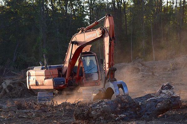 A szántók területe rohamosan nő, de ez veszélyezteti az erdőket