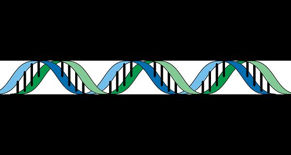 Az Európai Unió Bírósága szerint a génmódosítás kategóriájába tartozik a mutagenezis is