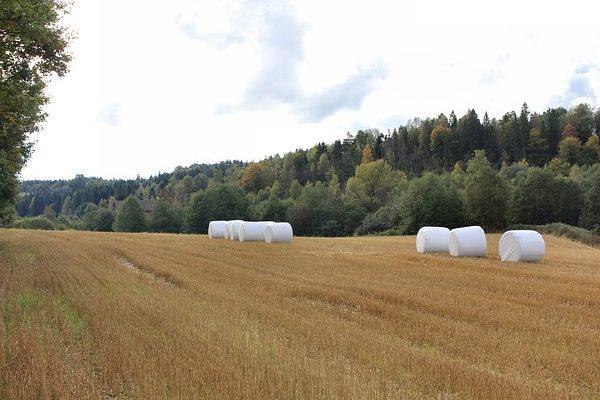 A román termőföld eloszlása nem kedvez a kisebb területen gazdálkodóknak