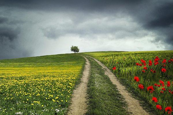 Az ökológiai jelentőségű másodvetés (EFA másodvetés) után támogatás jár, amit érdemes igénybe venni