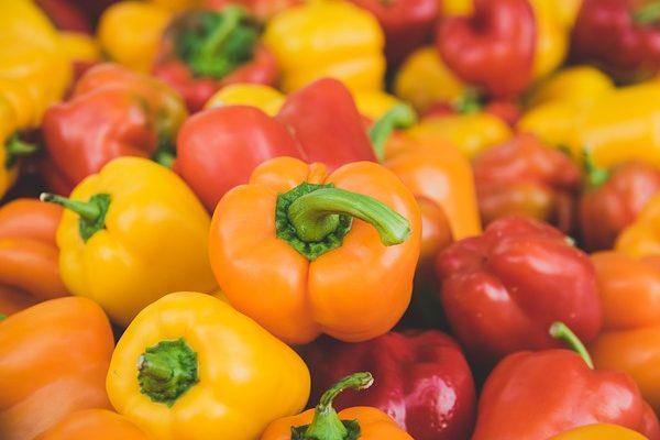 A kápia paprika termesztéséről tanácskoztak és cseréltek ismeretet az ágazat szereplői