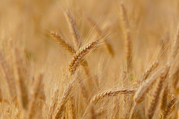 A gabona nedvességmérő minősége a termés eredményét, és a gazda hasznát is meghatározza