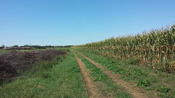 Az osztatlan közös tulajdon kérdése a gazdálkodás egyik legnagyobb kerékkötője, erre keresi a megoldást az Agrárminisztérium