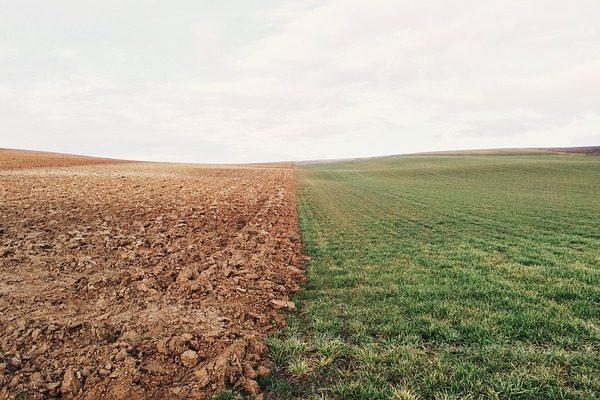 A megfelelőszervesanyag-tartalom kedvezően befolyásolja a talaj tulajdonságait