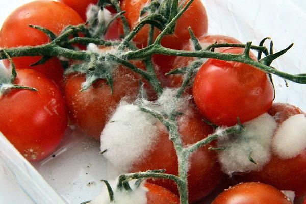 Nálunk is nagy az élelmiszerpazarlás: tavaly Magyarországon 1,8 millió tonna élelmiszer került kukába.