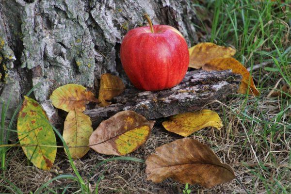 Van néhány teendő, amit mindenképpen el kell végezni az őszi kertben (Fotó: Pixabay, pasja1000)