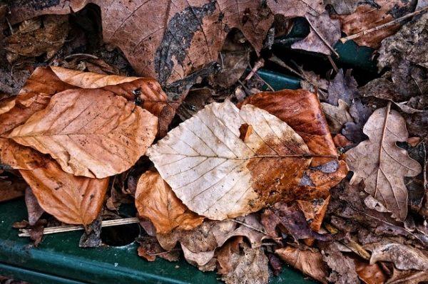 Mutatunk 6 tippet arra, mit kezdjen a lehullott levelekkel (Fotó: Pixabay, MabelAmber)