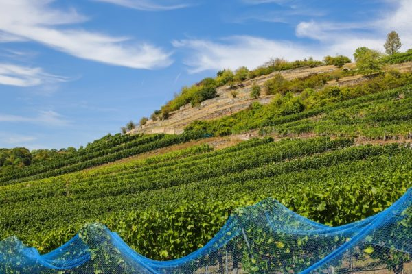 Kiemelt támogatás érkezik a borágazat további fejlesztése érdekében (Fotó: Pixabay, maxmann)