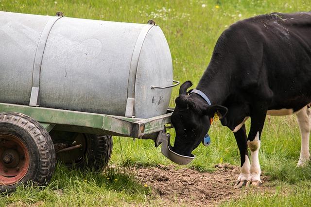 Sok állattartó gazdát is érint, hogy azillegális kutak engedélyeztetési időszakának meghosszabbítását szeretné a Nemzeti Agrárgazdasági Kamara - egészen 2020 végéig tolnák ki a határidőt