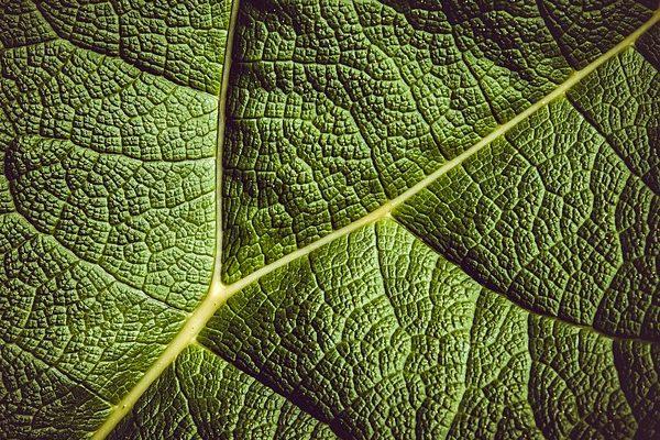 Avastagabb levelek miatt a növények kisebb hatékonysággal kötik meg alégköri szenet