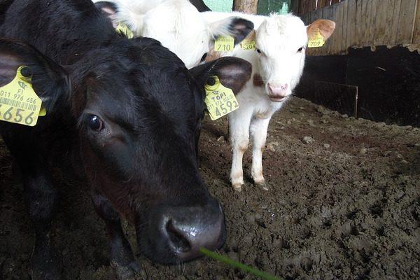 A biológiai hulladék felhasználásával tenne jót az állattartó telepekkel az új technológia
