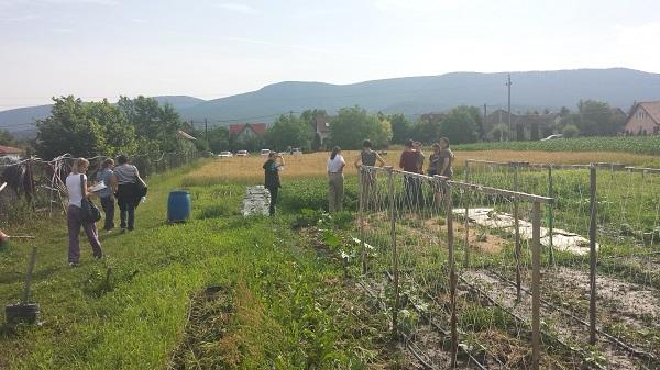 A mezőgazdasági idénymunkások is jelentős juttatást kaphatnak, ha elhelyezkednek a versenyszférában - képünk illusztráció