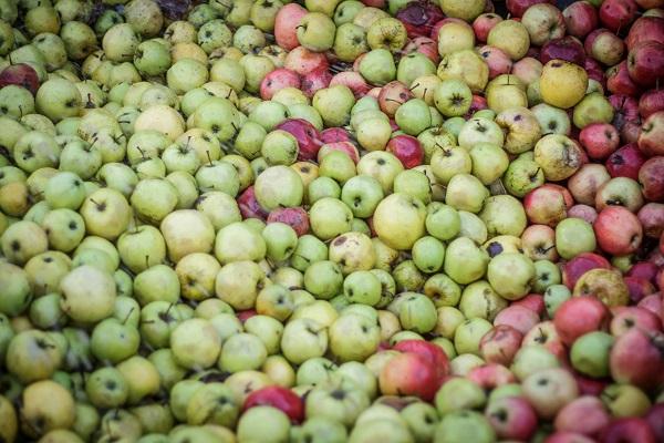 Azegészséges étrend globális ellátásához jelenleg nincs elég termőterület - Fotó: Adam's Photovision