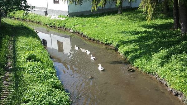 Rengeteg pénzt juttat a környezetvédelem támogatására az Európai Unió - képünkön kacsák úsznak a környezetvédelmet kiemelten kezelő fenntartható faluban, Gömörszőlősön, a Keleméri-patakban