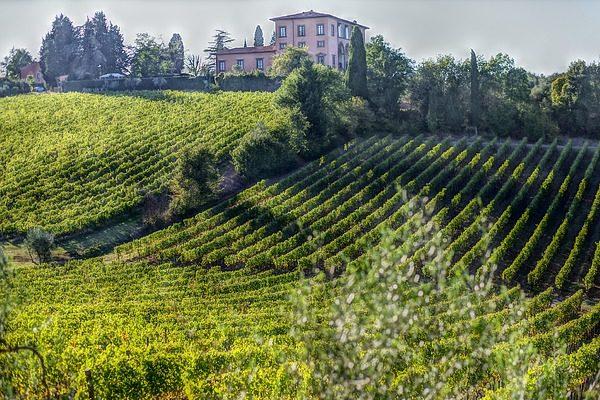 A rekordmennyiségű szőlő nagy bevételt hozhat Olaszországnak