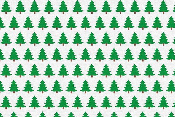 Sokkal magasabb lesz akarácsonyfa ára az idén, mint tavaly volt