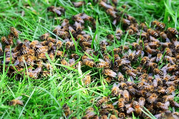 Megállítható lehet améhek pusztulása egy nemrég bemutatott módszerrel