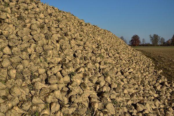 A magyar cukorágazat az árakról történő megegyezés híján nem jut előrébb