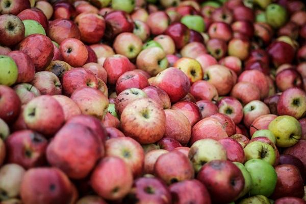 A túlkínálat miatt sem kellett a magyar alma, és a minősége sem megfelelő étkezési célra - Kép: Adam's Photovision