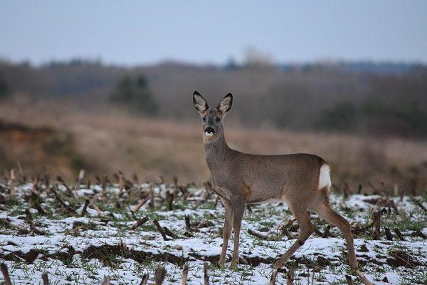 Készül azegységes vadkárfelmérési útmutató - segít megoldani a gazdák és a vadgazdálkodók közötti konfliktusokat