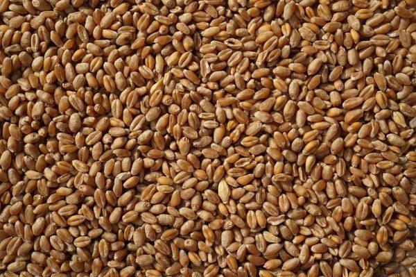 A gluténmentes búza nagyon sokat segítene a gluténérzékeny népesség táplálkozásában: jóval egyszerűbb lenne összeállítaniuk az étrendjüket