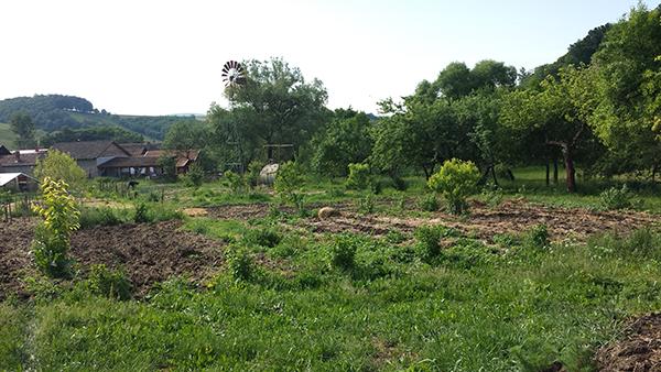 A gömörszőlősi mélymulcsos kertészet