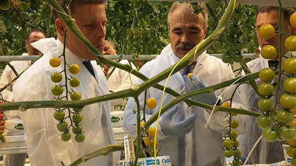 Márkus Zsolt, a Veresi Paradicsom tulajdonosa (balra) mutatja meg a téli termést Nagy István agrárminiszternek a paradicsomtermesztő üvegházakban