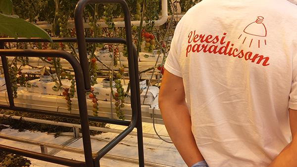Veresegyházon írt alá együttműködést a Tungsram, a Veresi Paradicsom és a gödöllői Szent István Egyetem 2018. decemberében. A közös szakmai munka egyik legfontosabb része az üvegházakban található holland paradicsom hibridek vizsgálata.