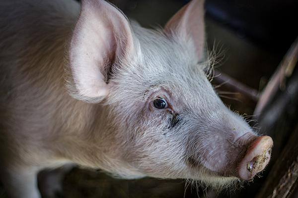 Az állattenyésztésben is hasznos szolgáltatást nyújt a blokklánc technológia - fotó: Adam's Photovision