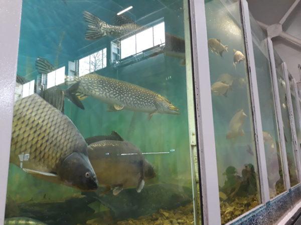 A magyar halágazat is sokat nyerhet a megnövekedett EU-s támogatásokból