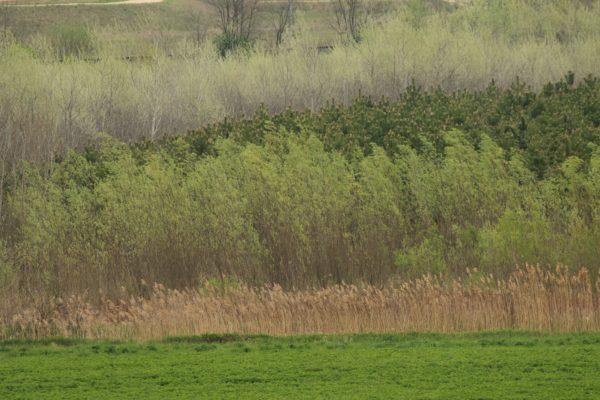 Az erdőtelepítés egy részlete - fotó: Bakonyerdő Zrt. - Gombási Mónika