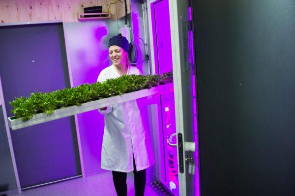 Így termeszt az IKEA salátát a bútoráruházai melletti épületben - Fotó: IKEA