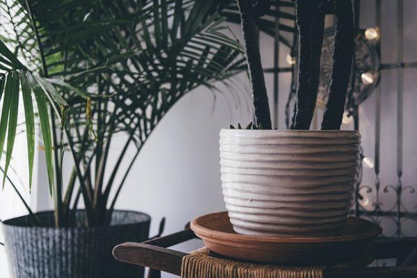 A szobanövények nem csak díszítik a beltereket, hanem azok levegőjét is tisztítják