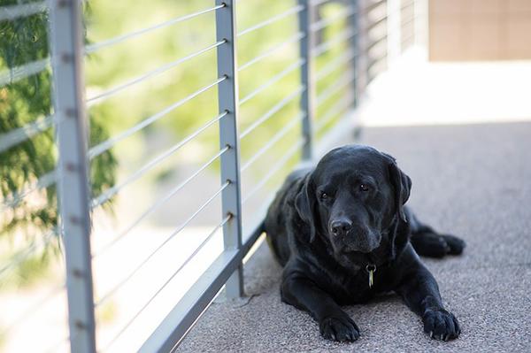 A kutyák örökbefogadása a Fogadj örökbe! című új, ingyenes kötet témája