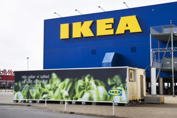 Saját áruházai mellett termeszt salátát az IKEA, amit az éttermeiben ad majd el májustól - fotó: IKEA